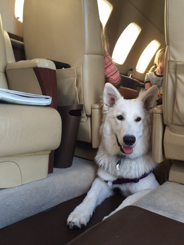 Don't Leave Your Best Friend Behind: Pets on Private Planes